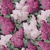 Lilac Grandiflora tapeta Cole&Son
